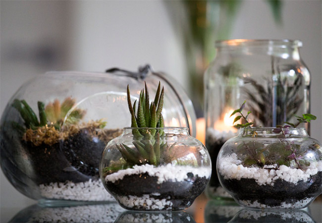 diy terrarium 10 id es faciles r aliser blog made in. Black Bedroom Furniture Sets. Home Design Ideas
