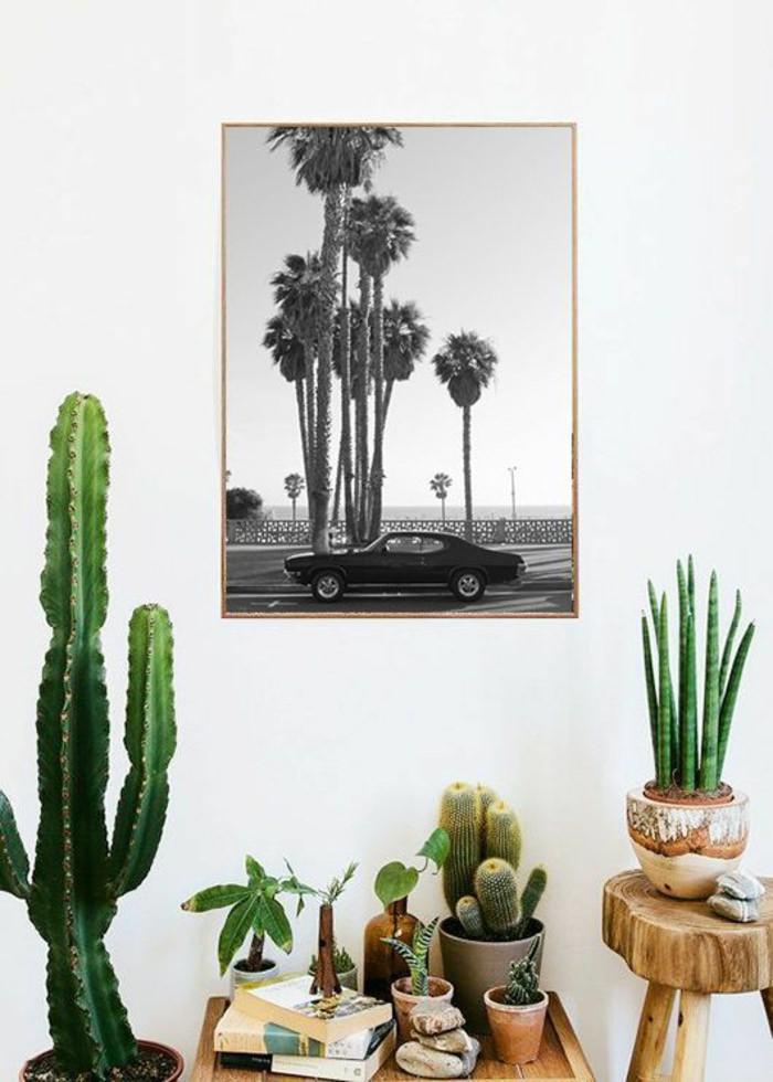 plantes déco vert